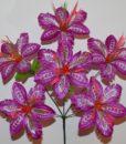 Искусственные цветы-Мальва павлин 6-ка R-604